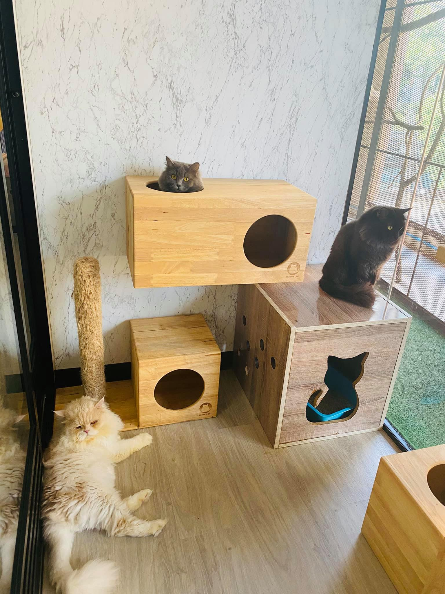 12-วิมานแมว2