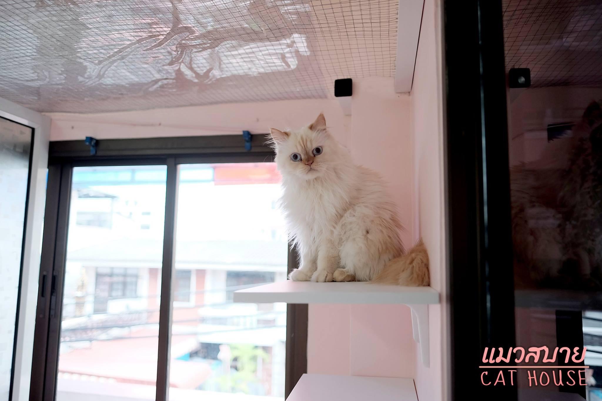 13-แมวสบาย2