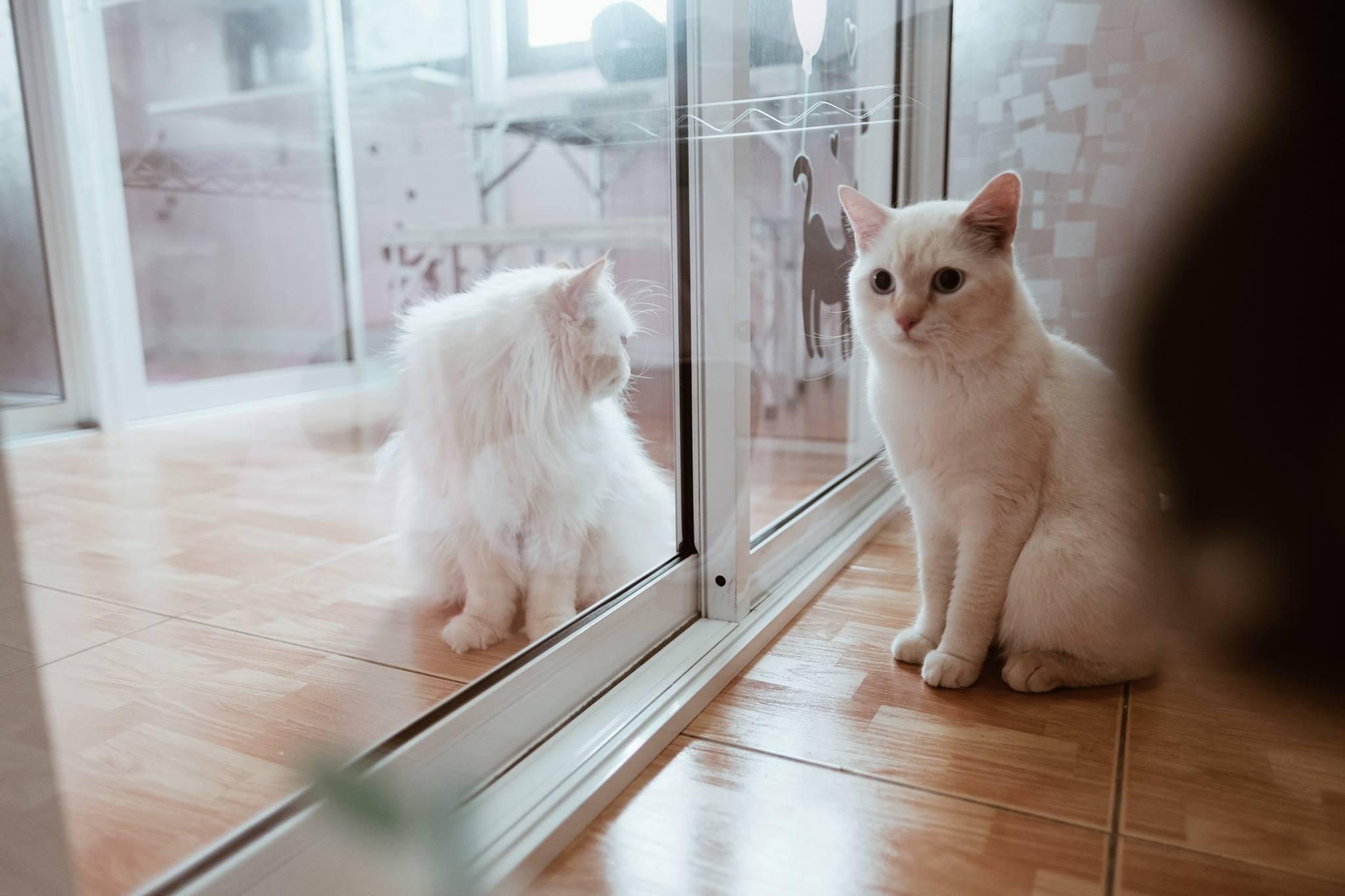13-แมวสบาย3